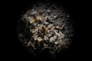 Will Heathcote_micro black soil